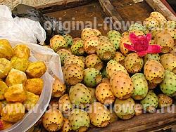 Опунция индийская (Opuntia ficus-indica)