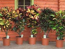 Где можно купить комнатные растения