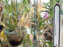 Температура воздуха и рост растений
