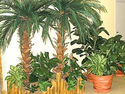 Правильное освещение растений